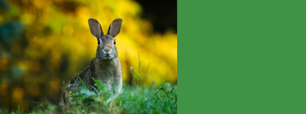 Hop Into Spring with our Unsecured Loan Special